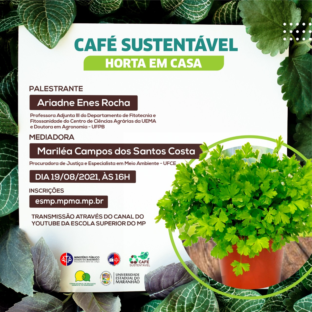 Café Sustentável - Horta em casa